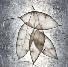 "Saatchi Online Artist Maja Hrnjak; Photography, ""leaves3-Limited edition of 10 prints"" #art"