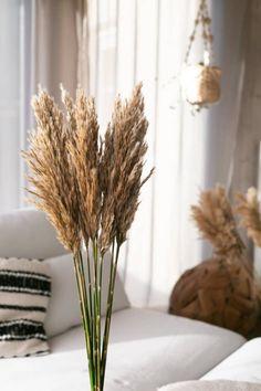 Trouva: Naturally Dried Pampas Grass Fluffy Set of 4 L75cm