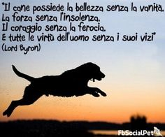 FbSocialPet: social network per cani, gatti, cavalli, tutti gli animali Horses And Dogs, Animals And Pets, Bull Terrier, Beatiful People, Freedom Life, Lord Byron, Boxer Dogs, Animal Quotes, Rottweiler