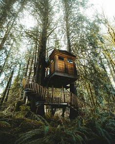 i love tree house