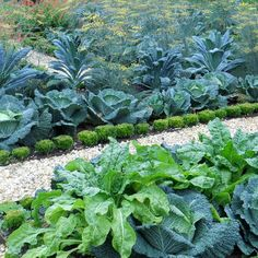Thomas Jefferson's garden at Monticello. Via Houzz's Outdoor Design Ideas, Pictures, Remodels and Decor