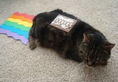 Alright we know you're a cat and all, but can't you put a LITTLE more effort into your Nyan Cat costume?? Sheesh.