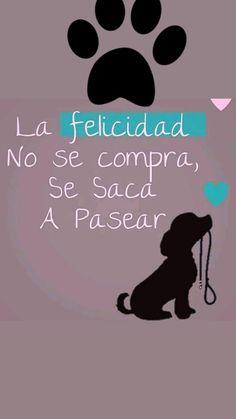 15 Mejores Imágenes De Maxi Perros Frases Mascotas Frases Amor De Perro