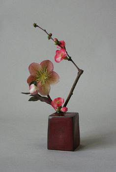 Like the color and shape of the vase.  ~~ Miniature ikebana-helleborus and quince by sogetsudc ~~