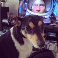 Nala Jack Russel Terrier | Pawshake