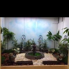 Shadow box garden!