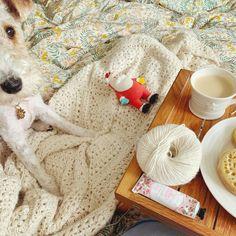 Coco Rose Diaries Coco Rose Diaries, Small Blankets, Pip Studio, Little Pumpkin, Peter Rabbit, Knit Crochet, Crochet Patterns, Diy Crafts, Knitting