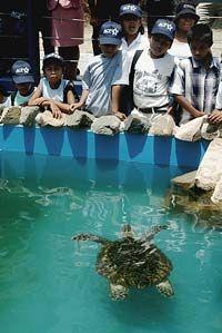 Children in the turtle pond