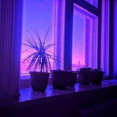 35 Ideas For Plants Aesthetic Purple Violet Aesthetic, Aesthetic Colors, Aesthetic Pictures, Aesthetic Photo, Aesthetic Black, Aesthetic Light, Badass Aesthetic, Photography Aesthetic, Aesthetic Grunge