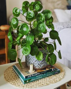 Look at those leaves! Pilea peperomioides looks perfect on every side table.