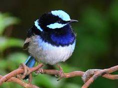 BIRDS - Αναζήτηση Google