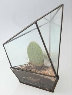 Irregular Cactus Cases - These Assembly New York Geometric Terrariums are Polyhedric Planters (GALLERY)