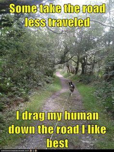 Some take the road less traveled  I drag my human down the road I like best