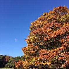 Beautiful colours on Hampstead Heath today