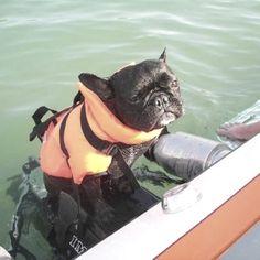 Frenchies don't swim!! :)