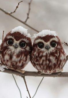 Fluffy twins