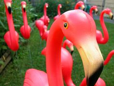 lawn ornaments, friends, lawns, pink flamingos, front yards, lawn decorations, garden, kitsch, parti