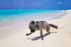 Sailing-Blog-Cruising-Bahamas-Bimini-Dog-Young-Couple-LAHOWIND-eIMG_1361
