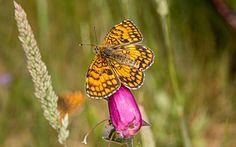 borboleta by Nuno Miguel Valente on 500px