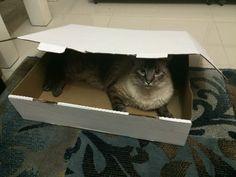 Amo uma caixa!