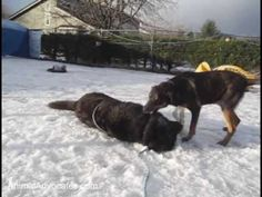 ▶ Chained & Freezing Dog: Pt 1 of Rescue - YouTube     4 years in a chain..least we can spread the word that YOU DON'T CHAIN YOUR FAMILY ALONE IN THE COLD!!!