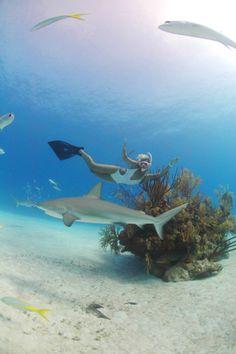 Shark swim! I wanna go swimming with sharks!