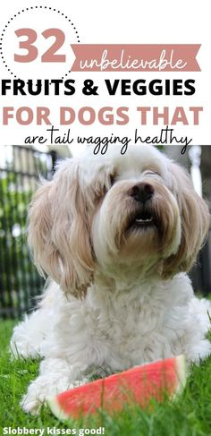 32 of the Best Fruits and Vegetables for Dogs. Low Calorie Fruits, No Calorie Snacks, Homemade Dog Cookies, Homemade Dog Food, List Of Vegetables, Fruits And Vegetables, Easy Dog Treat Recipes, Dog Food Recipes, Make Dog Food
