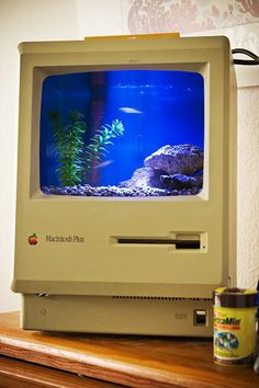 Reusing those old macs Mac Plus, Mac Make, Creative Crafts, Reuse, Concept, Computers, Fish Tanks, Macs, Terrariums