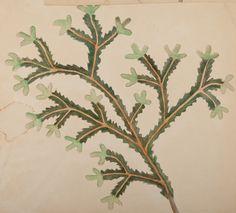 Kuvahaun tulos haulle akseli gallen-kallela Plant Leaves, Plants, Planters, Plant, Planting, Planets