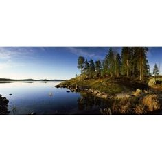 Trees at the lakeside Saimaa Puumala Southern Savonia Eastern Finland Finland Canvas Art - Panoramic Images (22 x 9)