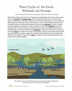 Worksheets: Wetlands and Swamps