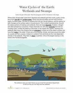 wetland food web activity science habitats pinterest web activity and food webs. Black Bedroom Furniture Sets. Home Design Ideas