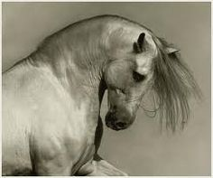 caballos andaluces - Google Search
