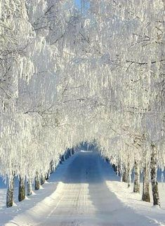 beautiful landscapes and flowers Winter Magic, Winter Snow, Winter Road, Winter Photography, Nature Photography, Coffee Photography, Winter Scenery, Snowy Day, Snow Scenes