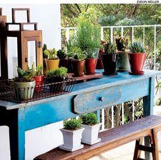 Resistentes, as suculentas e os cactos suportam sol e chuva em excesso, pouca ventilação e baixa iluminação e ainda podem dividir a mesma terra com outras plantas.
