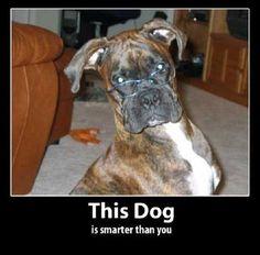glasses: a sign of intelligence #dog