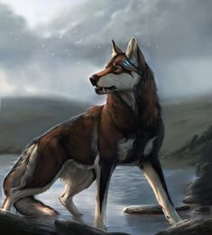 this is an aboranded wolf in amercian bared state of michigan of the u.a and its it on it moving away from the bareded tonight on the wolf blood moon and its hunting for its prey and it very hungry and it growling in its mind cry. Pet Anime, Anime Animals, Manga Anime, Anime Art, Fantasy Wolf, Fantasy Art, Anime Wolf Drawing, Anime Sketch, Wolf Character