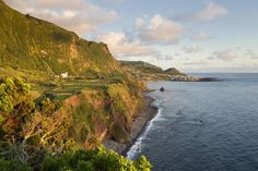 Lush, Tropical and Not So Far Away: The Azores Islands: Faja Grande, Flores, Azores Islands