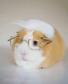 Glasses for a guinea pig...