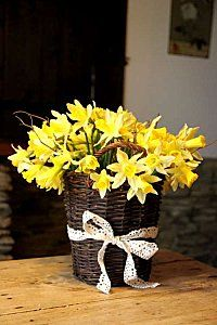 Daffodils will always remind me of Joanie!!!!!!