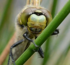 Dragonfly by Faillie Photos. A fantastic macro shot with lots of intricate detail