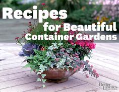 Combine the perfect container garden plants to accent your landscape. Learn how here:   http://www.bhg.com/gardening/container/plans-ideas/plant-combinations-for-beautiful-container-gardens/?socsrc=bhgpin052412