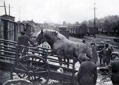 aantal trekpaarden in België bedroeg in 1880 precies 240.248 op een totaal van 271.974 paarden