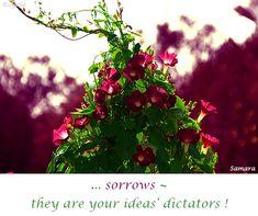 ... #sorrows ~ they are your #ideas' #dictators ! ( #Samara )