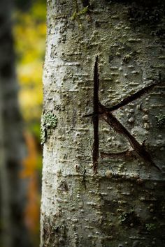 carved on a tree...