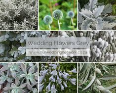 Wedding Flowers-Grey Sophisticated Grey flowers and Grey-Greenery for your wedding. Wedding Blog, Our Wedding, Grey Flowers, Greenery, Wedding Flowers, Wedding Inspiration, Weddings, Plants, Bodas
