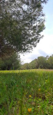أجمل صور الأشجار والغابات أجمل خلفيات و صور الأشجار والغابات أجمل صور الأشجار والغابات صور خلفيات صور خلفيات صور الأشجار والغابات Forest Wallpaper Plants
