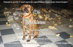 Söz Dinlemeyen Köpeğin Manifestosu | Sevgili Köpeğim Dogs, Animals, Animales, Animaux, Animal Memes, Animal, Pet Dogs, Dog, Animais