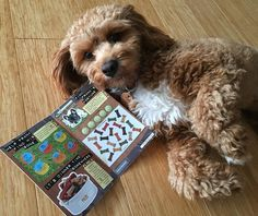 We made $50 on the new doggie-themed scratchie! Now hooman take me shopping!  by zoeythecavoodle
