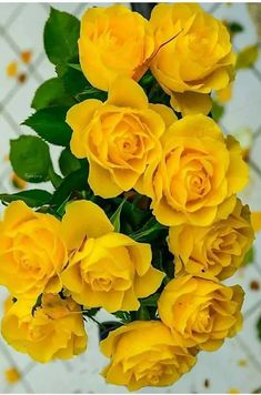 Get yellow flowers and growing information to add cheerful, sunny yellow plants to your landscape. Beautiful Flowers Wallpapers, Beautiful Rose Flowers, Flowers For You, Flowers Nature, Amazing Flowers, Pretty Flowers, Flowers Garden, Yellow Flowers Names, Yellow Roses